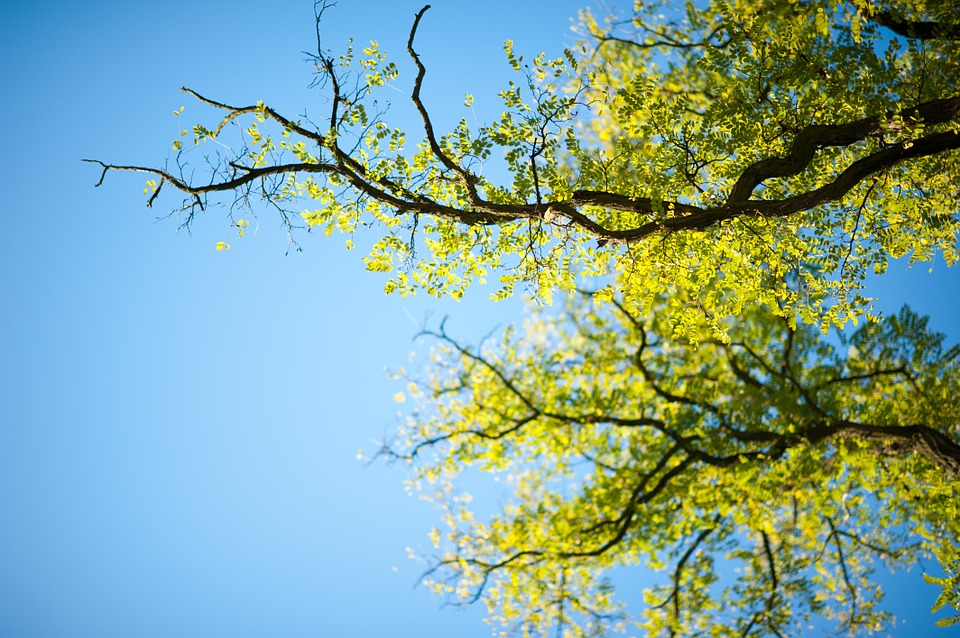 spalinowy rozdrabiacz do gałęzi
