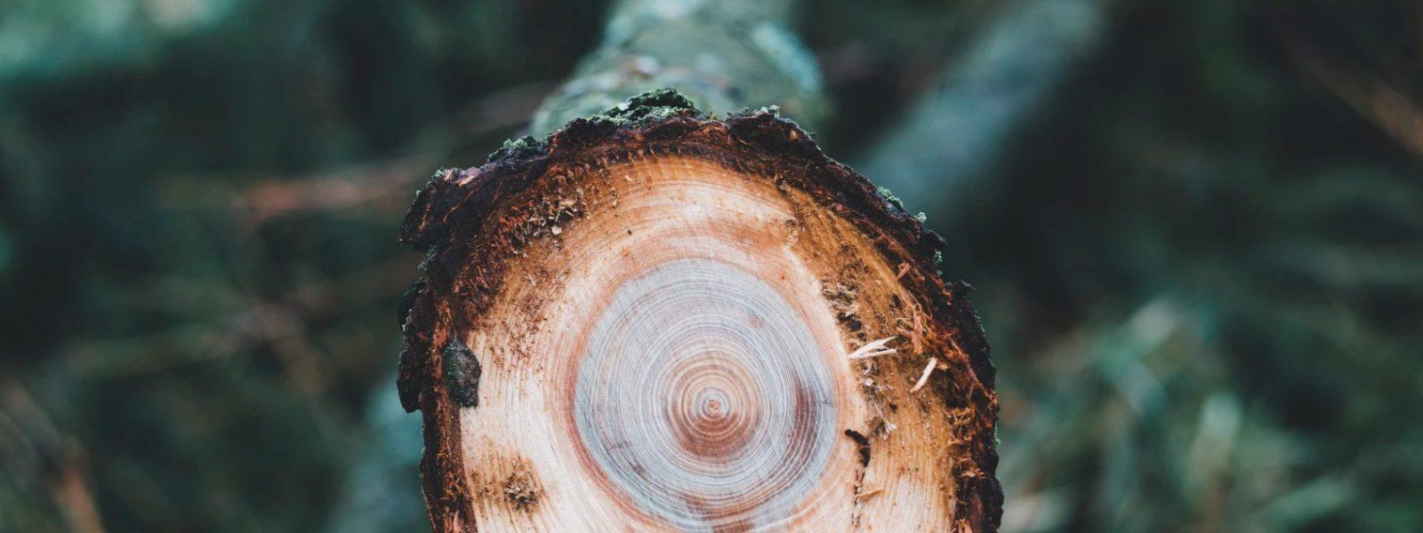 Czym dokładnie są drzewołazy?