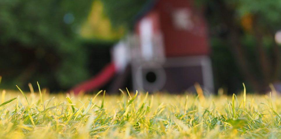 Jak wybrać nawóz do trawy?